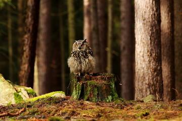 Canvas Print  - owl