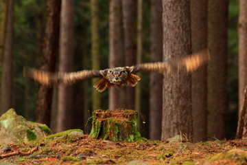 Wall Mural - flying owl in a forest