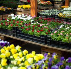 Fototapeta kwiaciarnia kwiaty ogrodowe obraz