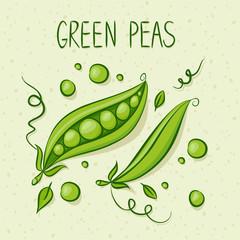 Green Peas. Vector illustration