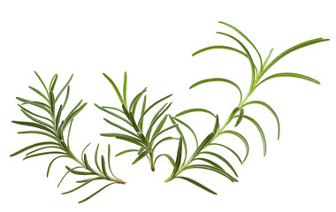 Rosemary twigs