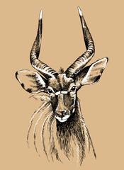 Vector sketch of a male nyala antelope