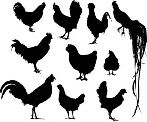 ten rooster silhouettes isolated on white
