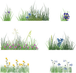 different flowers in grass isolated on white
