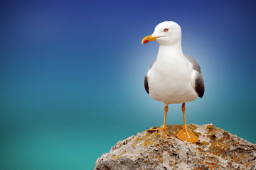 beautiful seagull with a beautiful sky and sea on the horizon