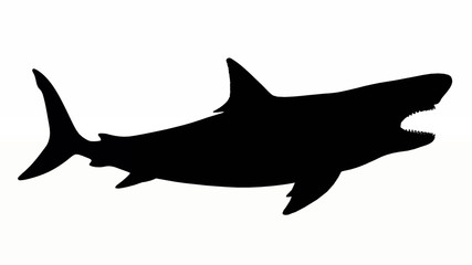 Silhouette of a White Shark