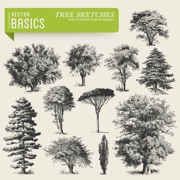 vector elements: tree sketches