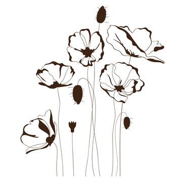 Poppy design, floral background