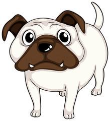 A white bulldog