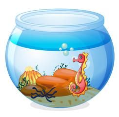 A seahorse inside an aquarium