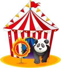 A panda beside the fireball