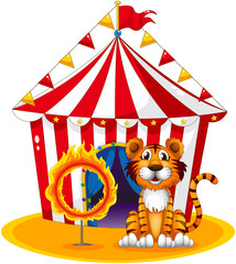 A circus tent at the back of the tiger and the ring of fire