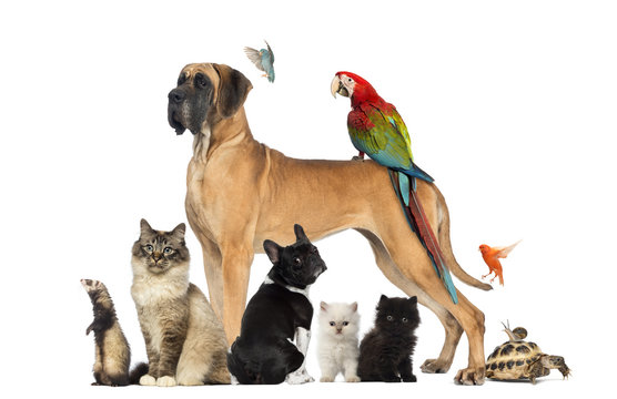 Group of pets - Dog, cat, bird, reptile, rabbit,...