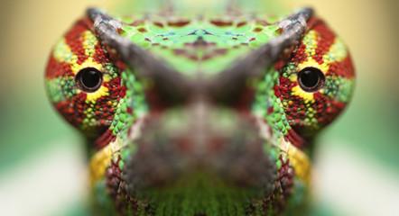 Photo sur Plexiglas Cameleon tête de caméléon