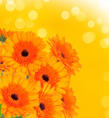 Abstract spring flower background with gerbera