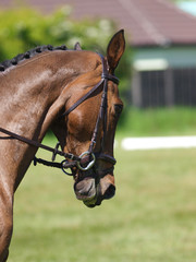 Head Shot of Horse Doing Dressage