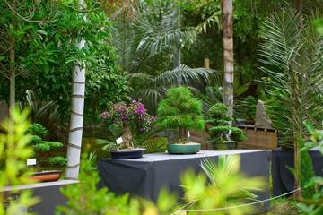bonsais exhibition in a botanical garden