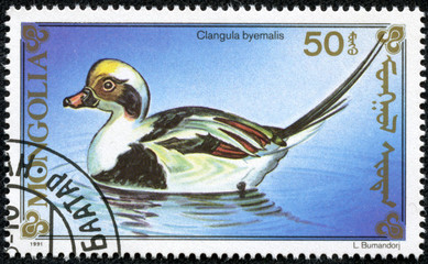 stamp printed by Mongolia, shows duck