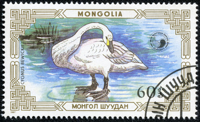 stamp printed by Mongolia, shows Swan