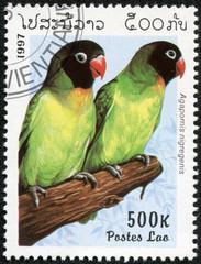 stamp printed in Laos shows Agapornis nigregenis