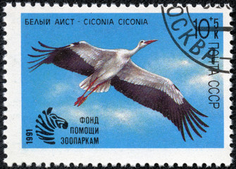 stamp printed by Russia, shows Ciconia white
