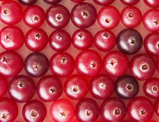 background of cranberries
