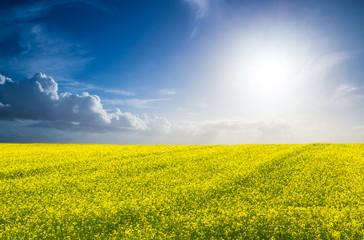 Landwirtschaft - Rapsfeld