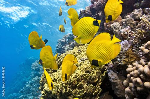 Желтая рыбка  № 1707686 без смс