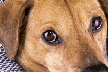 the eye dog