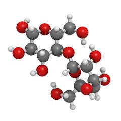Maltose (maltobiose, malt sugar), molecular model
