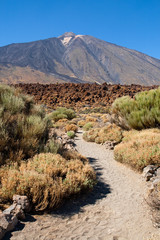 Trail to Mount Teide
