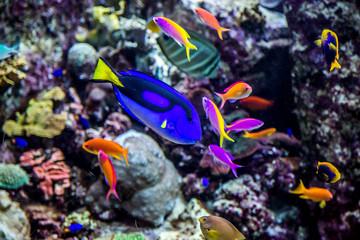 Poster Sous-marin Aquarium tropical fish on a coral reef