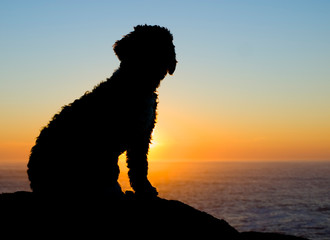 Backlight of a spaniel