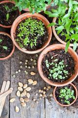 Fototapeta gardening obraz