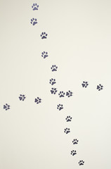 Pet footprints