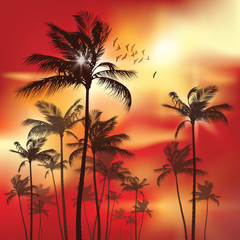 Wall Mural - Exotic Palm Trees at sunset Background