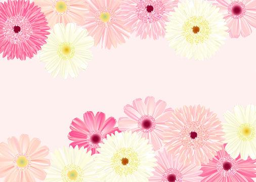 ガーベラの背景 ピンク横