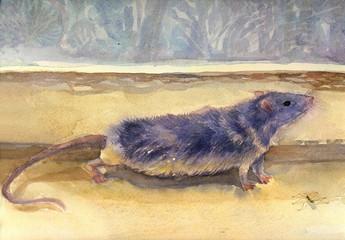 Watercolor Rat