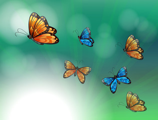 Fotorolgordijn Vlinders A stationery with orange and blue butterflies