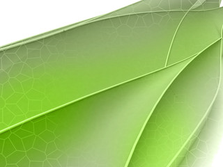 Green floral shape wide screen concept