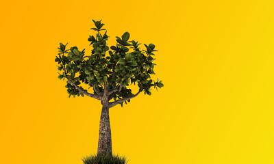 little bonsai
