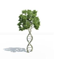 DNA shaped tree