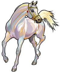 white arabian horse with bridle
