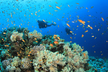 Two Scuba Divers diving on coral reef