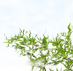 reflets de bambou