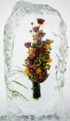 beautiful flowers with ice
