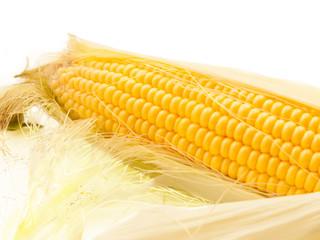 ripe An ear of corn