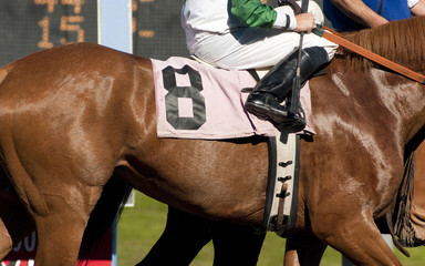 Jockey Leads Number Eight Horse to Start Gate at Racetrack