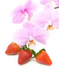 strawberries and a branch blooming orchid close-up on white back