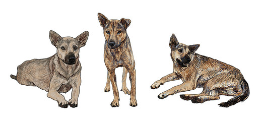 The dog in 3 poses